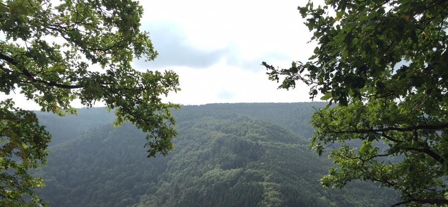 Ausblick auf den Hinterlandswald und das Wispertal